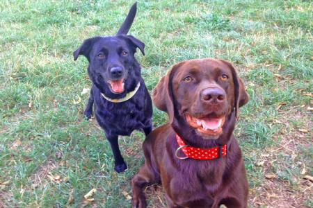 Manja und Kathy präsentieren stolz ihre Stoffhalsbänder