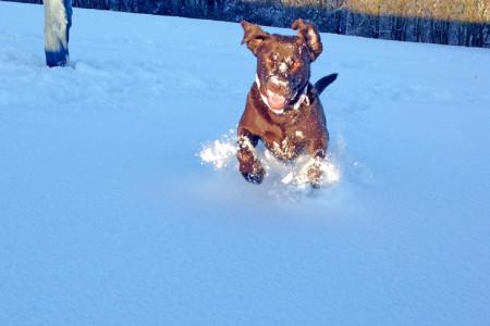 Manja läuft im Schnee auf und davon