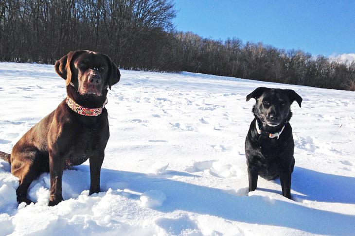 Wir genießen den Schnee – komm schon Frauchen, schieß uns noch einen Schneeball!!!!