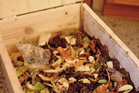Foto: frisch befüllt Wurmkiste, © Theresa Steininger