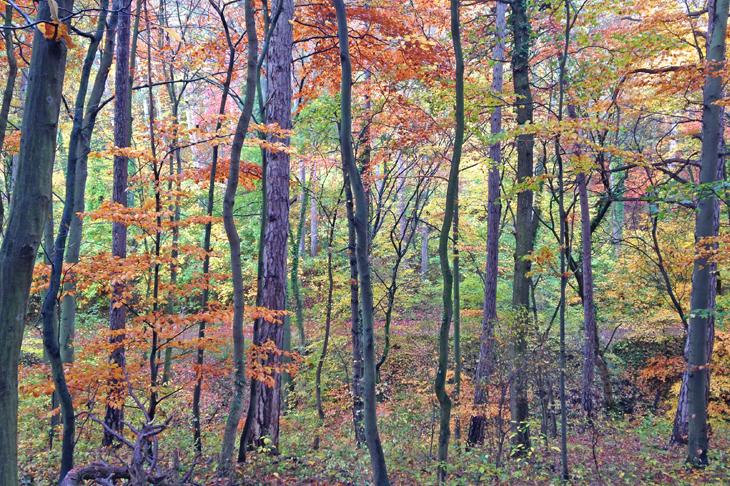 Foto: Wienerwald im Herbst, © S. Osterkorn, eNu
