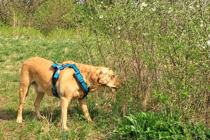 Foto: © Mit Hund im Wald unterwegs, © S. Osterkorn, eNu