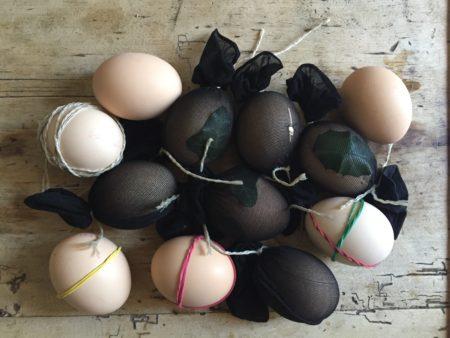 Die Eier sind fertig für ihr Farbbad