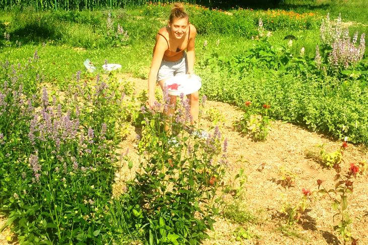 Kräuter im Garten sammeln, © wild.wuchs.Natur.at