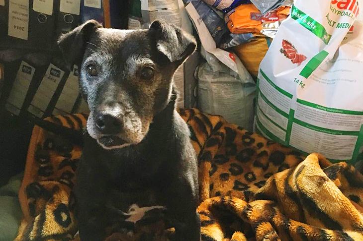 Foto: Eine Kuscheldecke für den Hund, © S. Osterkorn