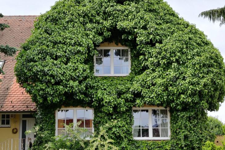 Begrünte Fasade