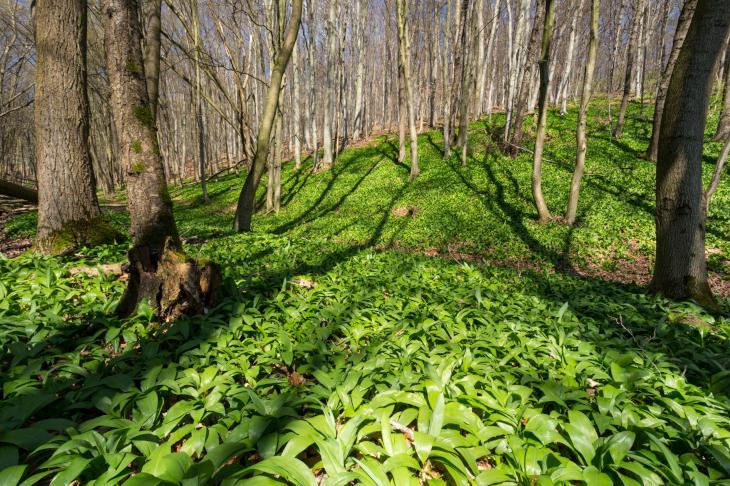 Frühling im Biosphärenpark Wienerwald