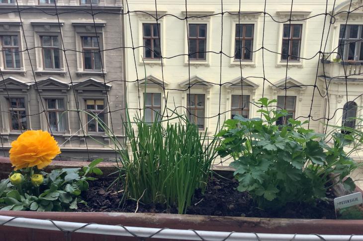 Kräuter am Fensterbrett, © Christian Mokricky