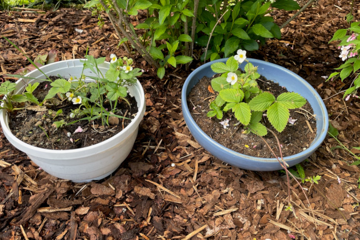 Gute Nachbarschaft nicht nur bei den Pflanzen, © S. Osterkorn